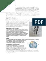 300390390-Resumen-Rodilla.docx