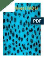 cellcycle.pdf