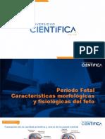 Periodo Fetal Características morfológicas y fisiológicas del feto