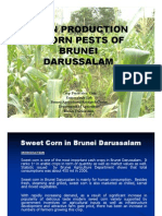 Corn Production & Corn Pests in Brunei Darussalam