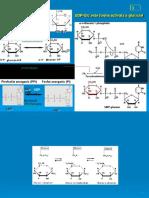 Metabolismul_glucidelor_34344712591459429129.pptx
