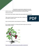 LOS SERES VIVOS.odt las plantas