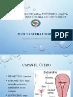 musculatura uterina