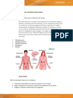 actividad 10 sistema endocrino.docx