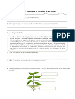 Guía-3º-n°1-Estructuras-de-las-plantas-1.pdf