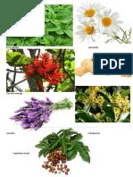 plantas medicinais todas os tipos de imagem