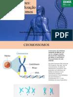 Aula 2- Genes. funções e localização nos cromossomos