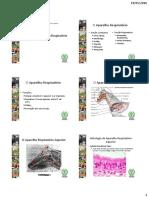 HISTOLOGIA Sistema Respiratório Superior roteiro de estudo (1)