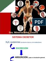 Tema 9. Sistema renal