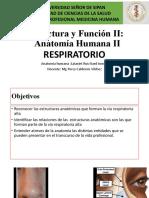APARATO RESPIRATORIO- fosas nasales