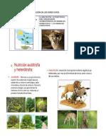 alimentacion autotrofa y heterotrofa  - CARNIVORO HERBIVORO