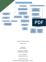 mapa conceptual especializacion