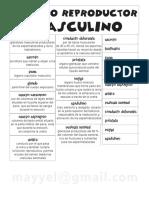 RepMasculino 3.pdf