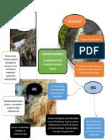 mapa mental servicios Ecosistemicos