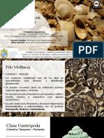 Semana 5 - Mollusca I.pptx