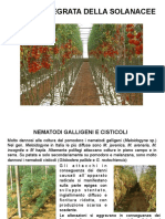 Non Solo Solanaceae