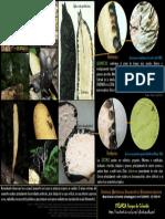 Xylaria Hongos de Colombia pdf (2109)