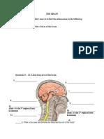 nervous-system-worksheet