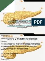 pancreas.