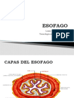 ESOFAGO[1]