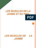 Les Muscles de La Jambe Et Du Pied
