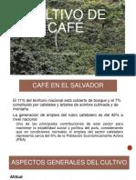 5. Cultivo de café