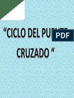 CICLO DEL PUENTE CRUZADO