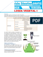 Histología-Vegetal-para-Tercer-Grado-de-Secundaria