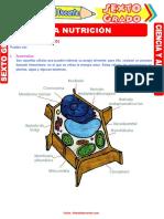 La-Nutrición-para-Sexto-Grado-de-Primaria