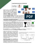 CLASE 8 NF I. BASES NEUROLOGICAS DE LA PERCEPCION seba.pdf
