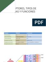 RECEPTORES, TIPOS DE FIBRAS Y FUNCIONES