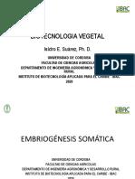 embriogenesis somatica.pdf