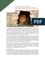 Documento 66 (1)