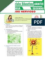 Tejido-Nervioso-para-Segundo-Grado-de-Secundaria