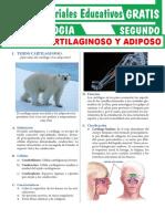 Tejidos-Cartilaginoso-y-Tejido-Adiposo-para-Segundo-Grado-de-Secundaria