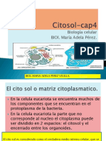 1. CITOSOL_13pp
