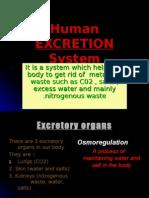 Human Excretion System