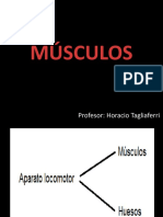 Musculos Powerpoint h. Tagliaferri