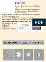 Apoptosis Lecture