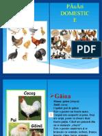păsări domestice Carte digitală (1).pptx