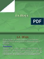 MORFOLOGÍA DE LA HOJA.pdf