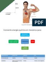 00000177-contracción muscular