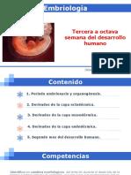3. TERCERA A OCTAVA SEMANA DEL DESARROLLO.pdf