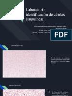 Laboratorio identificación de células sanguíneas..pptx