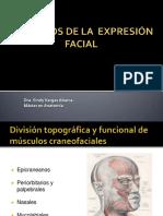 msculosdelaexpresinfacial