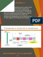 DIAPOSITIVA TRANSPORTE DE MEMBRANA