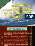 ABEJAS COMO POLINIZADOR EN CULTIVO DE PALTO Por