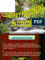 COSECHA Y POSTCOSECHA EN CITRICOS Por