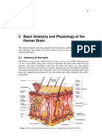 basic brain anatomy and physiology.pdf