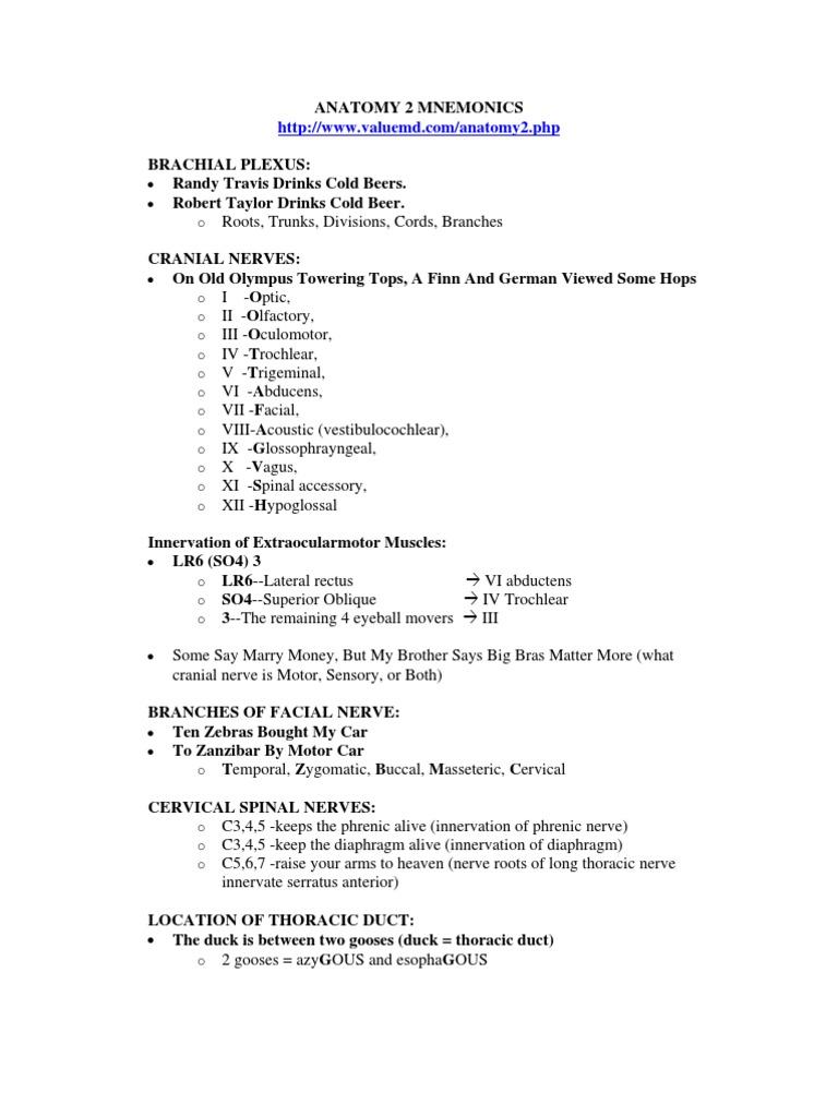anatomymnemonics.pdf   Common Carotid Artery   Anatomical Terms Of ...